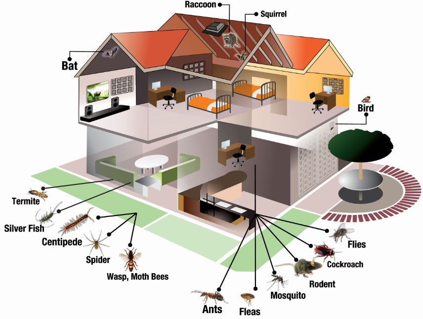 Home-Pests-Scheme